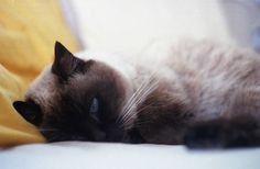 one good morning #2 | Flickr - Photo Sharing! My cat Koma is 20 years old, but still this lovely:)))