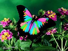 BUTTERFLY COLOR - Worth1000 Contests