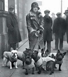 Old photo of young woman walking many Frenchies