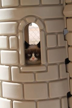 Grumpy Cat is in the Tower   The Daily Grump | January 7, 2013