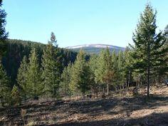 Lot 1 Orthorp Lake Road Eureka, Montana MLS #:299468 Offered at: $135,000 • 10.15 acres • Residential • Kootenai Ridge Listed by:  Hunter Homes (406) 314-1417 www.rockymtnre.com
