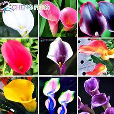 オランダカイウユリ種子ホーム鉢植え盆栽植物種子バルコニーガーデン植物虹オランダカイウ花混合semillasパッキング20ピースホット販売