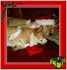 Merry Christmas from Wallis & Moira from the Netherlands