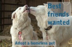 Right now there's over 300,000 adoptable pets on Petfinder.com