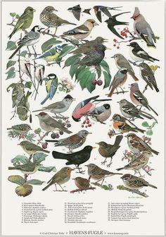 Havens fugle plakat A2