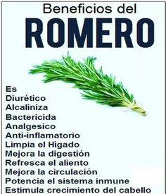 Beneficios del Romero.