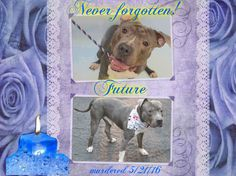 5/22/16 You poor terrified sweetheart! What happened to you love?How could they!! My heart ached for you reading about you,so many felt your pain,but NO ONE CAME FOR YOU! It´s todally devastating!They all saw your pains and fears!! I can´t stop my tears thinking of the fact that your Future was to be killed... so contradictory! I loved you so much precious boy, please forgive humans failure, it´s incredibly cowardly and heartless! Tears of goodbye LOVE - You are in my heart forever FUTURE!