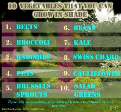 10 Vegetables That You Can Grow in the Shade - These will successfully grow with at least 3 to 6 hours of sun per day