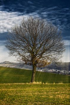 Light Tree by Christoph Müller on 500px