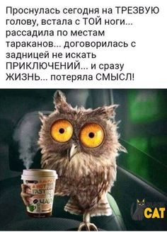 Фотография Russian Humor, Funny Expressions, Clever Quotes, Gratitude Quotes, People Quotes, Man Humor, In My Feelings, Cool Words, Quotations