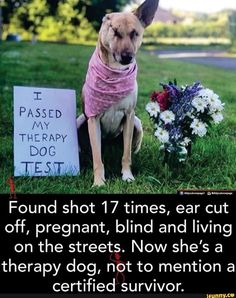 Found shot 17 times, ear cut off, pregnant, blind and living on the streets. Now she's a therapy dog, not to mention a certified survivor. I Love Dogs, Cute Dogs, Cute Babies, Amazing Animals, Animals Beautiful, Cute Little Animals, Cute Funny Animals, Dog Test, Human Kindness