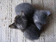 Omgoodness. More animal love here>> http://furlesscosmetics.com.au/furless-cosmetics-blog/itemlist/category/8-animals