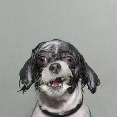 Hilarious wet dogs.They're not happy.