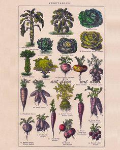 botanical print of vegetables