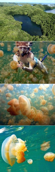 An awesome Jellyfish Lake hidden on Eil Malk Island in Palau (around 500 miles east of the Philippines)
