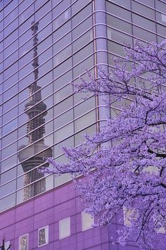 Beautiful spring in Tokyo, Japan. Lavender Aesthetic, Purple Aesthetic, Go To Japan, Visit Japan, Kyoto, City Ville, Feeds Instagram, All About Japan, Tokyo Tower