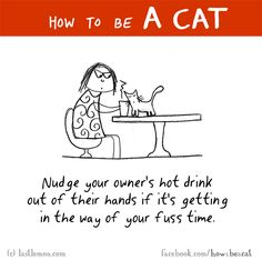 HOW TO BE A CAT: Nudge your owner's hot drink out of their hands if it's getting in the way of your fuss time.