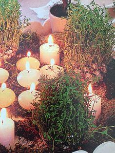 Deco nature - centre de table- Graines germées dans pomme de pin