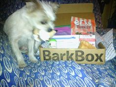 Barkbox post