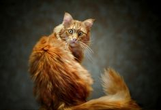 Cat, kitty, furry, kat, furry, pet, cute, nuttet, spooked, photograph, photo