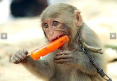 Animals+Enjoying+Summer | These Animals Stay Cool In The Summer Heat!