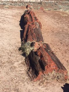 Petrified Wood in the Petrified Forest National Park, Arizona. National Park Camping, National Parks Map, Petrified Forest National Park, Arizona Road Trip, Best Campgrounds, Park Hotel, Petrified Wood, Hotels Near, America
