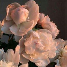 Literature / Art / Poetry / / pale girl / Poder L - Floral Garden Ideas Peach Aesthetic, Flower Aesthetic, Aesthetic Photo, Aesthetic Pictures, Aesthetic Themes, Aesthetic Poetry, Aesthetic Boy, Tout Rose, Photographie Portrait Inspiration