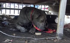 A very special senior dog named Duncan is living his remaining days safe, warm, and loved thanks to another kind person who calledHope for Paws. Duncan had wandered into a junkyard and if it weren't for a compassionate worker that noticed the sweet boy, he would have been picked up by animal control.