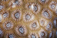 The Textured Patterns of Corals