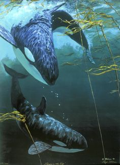 Orca Whales: Playing in the Kelp - Paper Prints - Artwork Reproductions - Giclees, Paper Prints, Prints and Gift Store - Mark Hobson Arte Orca, Orca Art, Beautiful Sea Creatures, Animals Beautiful, Cute Animals, Sea Life Art, Ocean Life, Orcas, Whale Painting