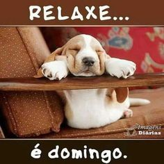 New Funny Dogs Quotes Sleeping Ideas Bon Weekend, Dog Quotes Funny, Funny Dogs, Animals And Pets, Cute Animals, Happy Week End, Amor Animal, Bassett Hound, Funny Animal Pictures