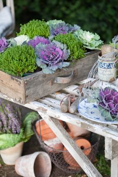 Ornamental cabbages. I've always wanted to plant a garden of these! Love the wooden box.
