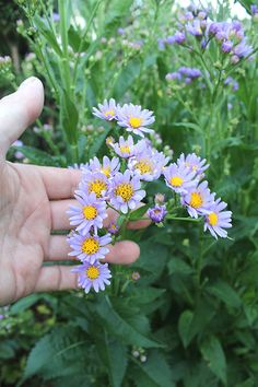 How to Plant Potted Flowers Outdoors in the Soil : Garden Space – Top Soop My Flower, Flower Pots, Gardening Websites, Garden Journal, Beneficial Insects, Lavender Buds, Replant, Birth Flowers, Small Leaf
