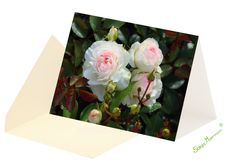 Diese Rosenkarte ist eine Karte ohne Text und eignet sich für verschiedene Anlässe z.B. als Jubiläumskarte, Geburtstagskarte, Genesungskarte, Dankeskarte.. Thanks Card, Joie De Vivre, Birth, Florals