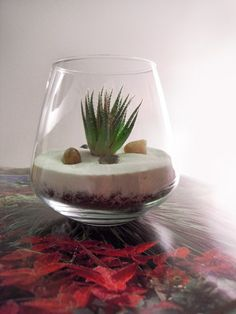 Fuel for my terrarium obsession. Mini Terrarium, Terrarium Plants, Succulent Terrarium, Glass Terrarium, Air Plant Display, Plant Decor, Air Plants, Garden Plants, Planting Succulents