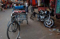 India, rickshaw, sacred cow, Sadar Bazaar, Pushkar, Rajasthan