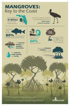 Image result for mangrove infographic
