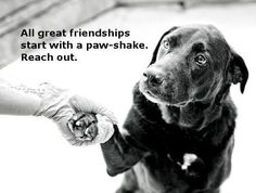 Get Unique Collection of Dog Quotes Pictures with Message For Friends and Family Shelter Dogs, Rescue Dogs, Animal Rescue, Pet Dogs, Dogs And Puppies, Dog Cat, Pets, Doggies, Huge Dogs