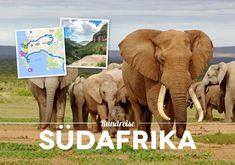 Südafrika Rundreise Big Animals, Africa Travel, South Africa, Things To Do, Elephant, World, Holiday, Life, Highlights