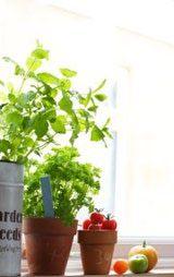 Herb Garden Tips for A Good Feng Shui Kitchen
