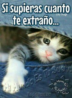 Imagenes De Gatitos Tiernos Con Frases De Amor Tierno Cats