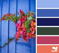 DesignSeeds® FB { global brights } July 29 2014
