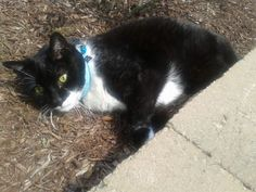 Teddy 14 hot humid basking tho in 90;degrees. Sent in by Thomas Kessel: