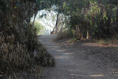 picture of Ellwood Butterfly Preserve in Goleta, CA