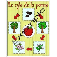 Pommes : Le cycle de la pomme