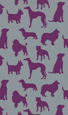Best In Show - wallpaper in the bathroom of our b in Bath. Amazing!  Would be great for a dog room in my dream home!