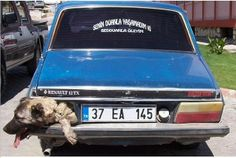 Quick links to share the petition: Prosecute Turkish owner who uses dog as signal light!   Yousign.org