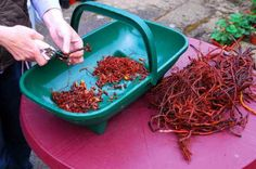 Cutting madder root