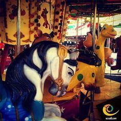 """""""Carrusel... Un carrusel de niños... Un carrusel de amor... Carrusel... Un carrusel de ternura... Un carrusel de ilusión"""" #tiempo #turismo #tlaxcala #pasado #vive_mexico"""