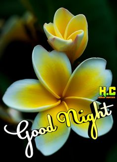 Sweet Night, Night Wishes, Good Night Image, Good Morning Messages, Hd Images, Memories, Gallery, Quotes, Good Night Greetings